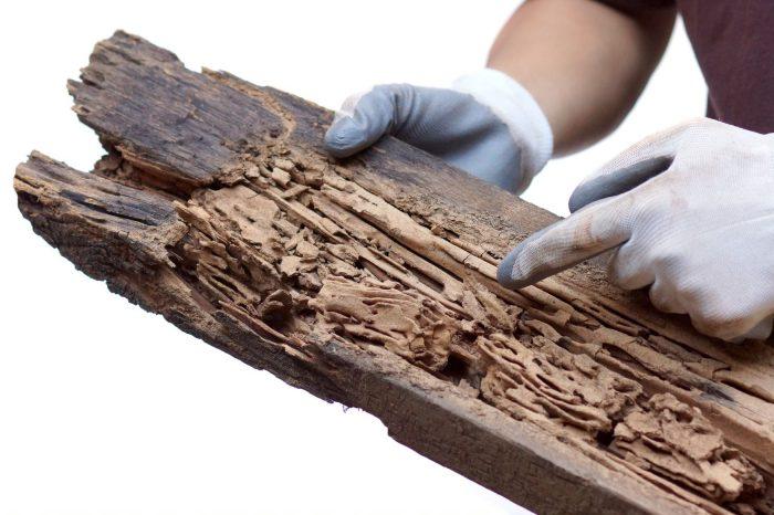 Agentes biológicos que atacan las maderas de Colombia